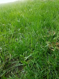 Lawn mowing and yard care Council Bluffs
