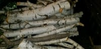 Assorted SHORT branches of BIRCH TREE LIMBS  (each Omaha, 68137
