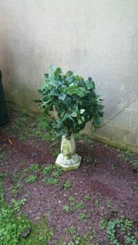 Semen base and plastic pot and fake ivy. Hopatcong, 07843