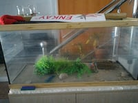 brown wooden frame clear glass fish tank