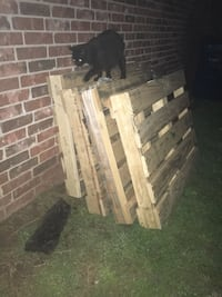 black cat and four wood pallets