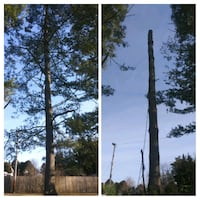 tree service and landscaping Laurel, 20707