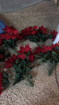 Poinsettia  Lewis Center, 43035