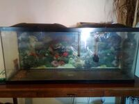 Big fish tank needs a little cleanin Marlow Heights, 20748
