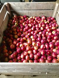 Beautiful well established Apple Orchard in Mexico NY COMMERCIAL For sale 4+BR 3.5BA Mexico