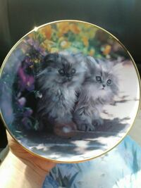 two gray kittens printed ceramic decorative plate Ormond Beach, 32174