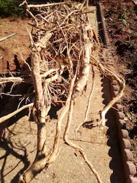 Garden roots removal Triangle