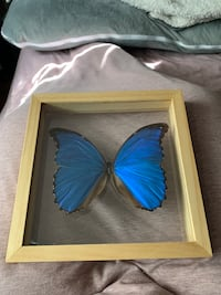 Real framed butterfly display