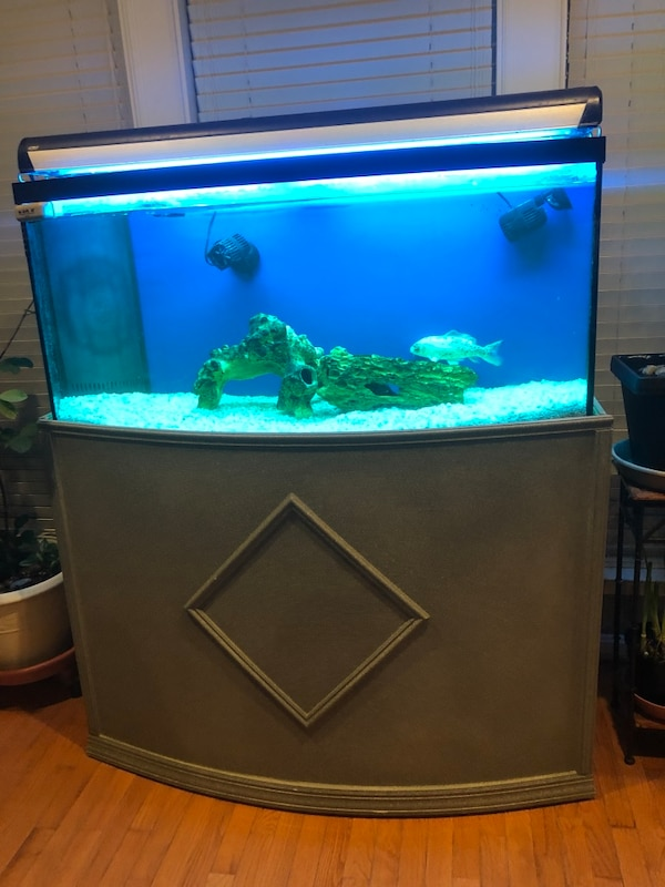 white and blue fish tank