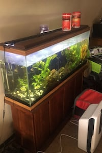 55gallon fish tank