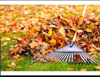 leaf removal Annandale