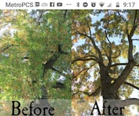 Tree cutting removal any landscaping Pasadena
