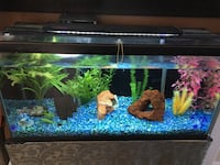 30 gallon fish tank with steel stand Ottawa, K2J