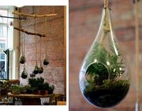 Tear drop glass terrarium