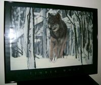 Beautiful Timber Wolf Framed Picture Mississauga, L5B 3Y3