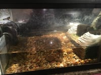 20 gallon beautiful viquarium Los Angeles, 90036