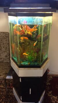 Clear glass fish tank with black frame Toronto, M1S 2V8