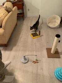 Pet sitting.Let me give your pet a great home while you are a way.thanks for your time and have a great day .my phone number is + [TL_HIDDEN]  . Langley
