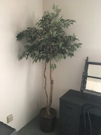 indoor plant Kelso, 98626