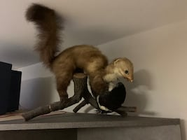Taxidermy Decoration