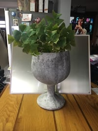 Lucky Shamrock Plant, in Cement Wine Glass  Hamilton, L8H 2T4