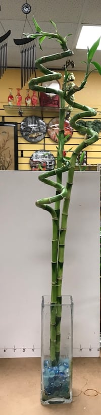 """3pcs spiral bamboo combination ( 27"""" 33"""" & 40"""", vase is not included ) Reno, 89502"""