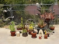 Cactus and Succulents. San Marcos, 92078