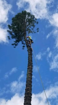 tree trimming and removal stump grinding