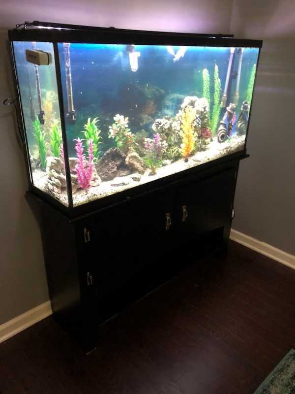 used 60 gallon tank with stand fluval 350 canister filter air pump