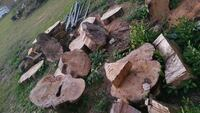 FREE Wood Dover, 33527