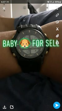 Baby ???? For Sell Hartford, 06120