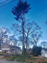 Emergency Tree Services Medford