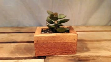 Hand Crafted Wooden Tray with Succulent. Makes a great Xmas gift.