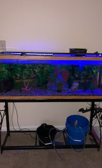 60 Gallon Fish Tank With Fish