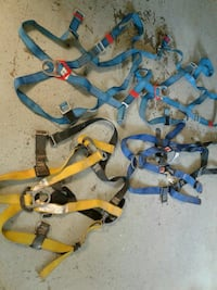 four blue and yellow harness