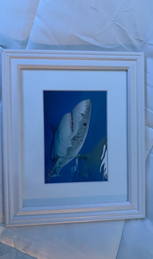Great White Shark Pictuew c9bde68e-75b3-4226-a907-6960adc0b58f