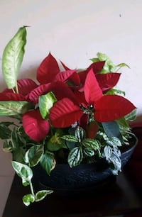 red and green leaf plant Woodbridge, 22191