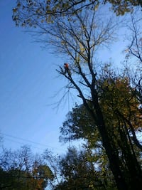 Diego lansdcaping tree service removal Columbia, 21045