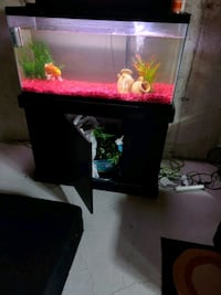 Fish tank with stand and koi fish