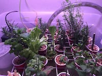 Aquaponics system available Mississauga, L5R 1S3