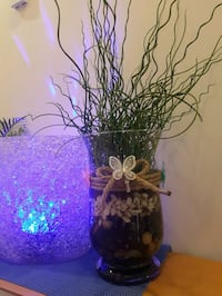 Healthy juncas curly grass in large vase. Vancouver, V5L 3X2