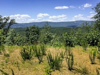 Amazing 3.69 Acre Mountain Top Vacant Land for Sale in Strasburg, VA! Strasburg