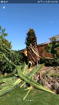 Palm tree removal Discovery Bay