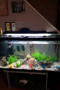 90 gal fish tank with fish and everything  needed except stand