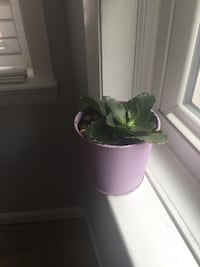 House plant Washington
