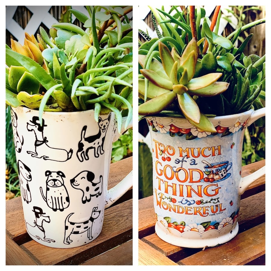 Adorable Mugs with Succulents