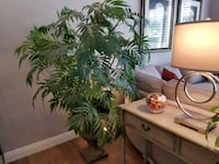 """Artificial palm 5'5"""" tall in excellent condition"""