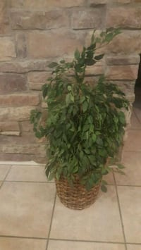 Decorative artificial plant Chandler, 85286
