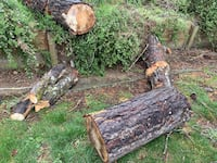 Free pine wood for fire wood. Needs to be cut and dried