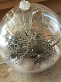 Terrarium Air Plants Woodbridge, 22191